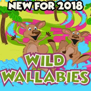 Wild Wallabies